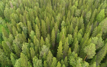 19 сентября - День работников леса